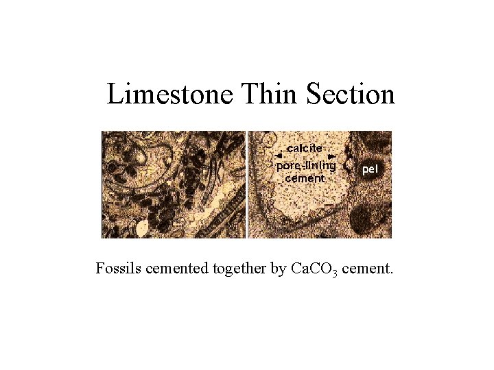 Limestone Thin Section Fossils cemented together by Ca. CO 3 cement.