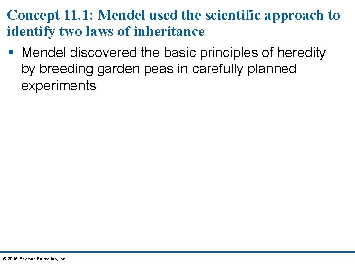 Concept 11. 1: Mendel used the scientific approach to identify two laws of inheritance