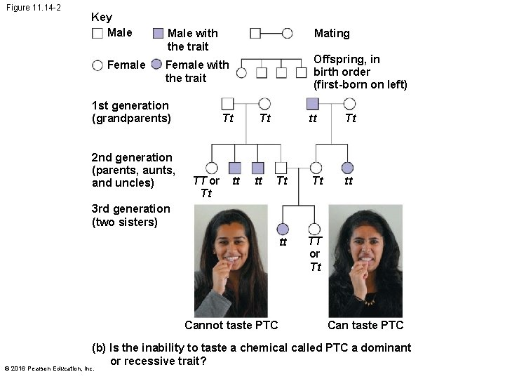Figure 11. 14 -2 Key Male Female Mating Male with the trait Offspring, in