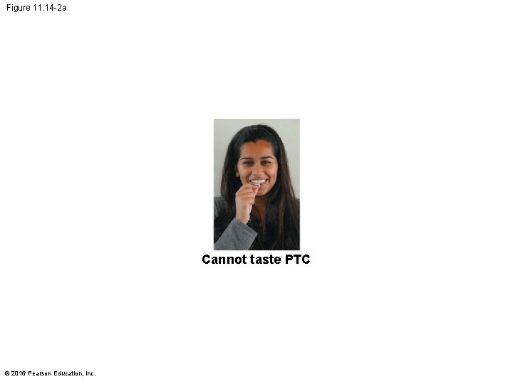 Figure 11. 14 -2 a Cannot taste PTC © 2016 Pearson Education, Inc.