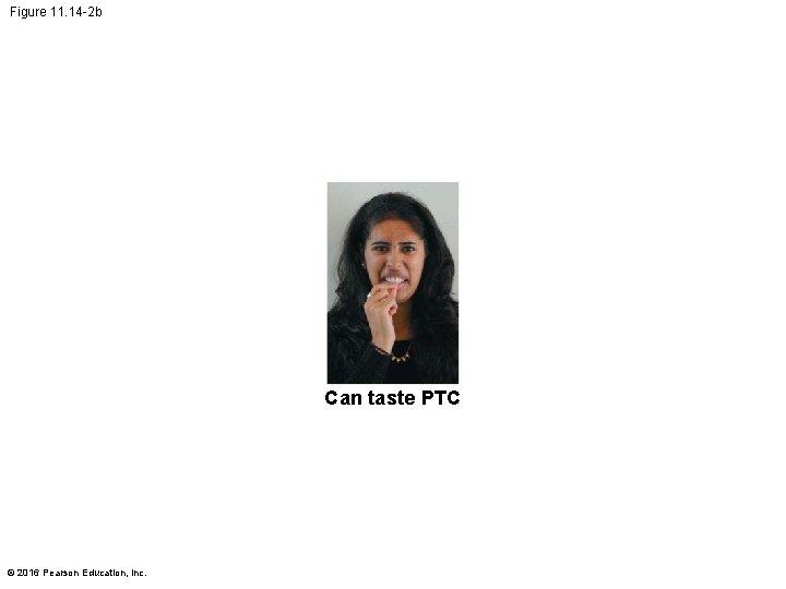 Figure 11. 14 -2 b Can taste PTC © 2016 Pearson Education, Inc.