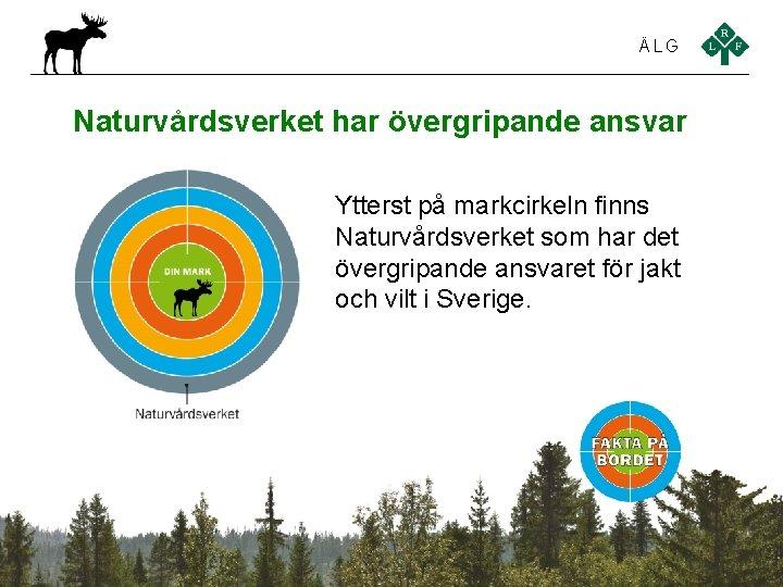 ÄLG Naturvårdsverket har övergripande ansvar Ytterst på markcirkeln finns Naturvårdsverket som har det övergripande