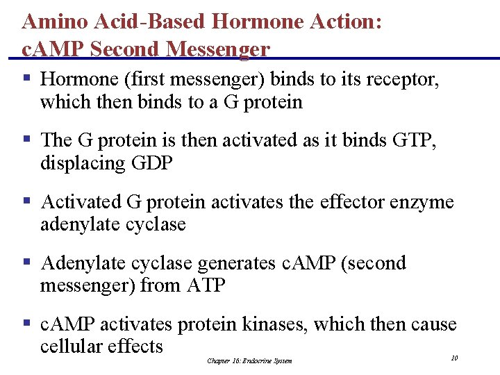 Amino Acid-Based Hormone Action: c. AMP Second Messenger § Hormone (first messenger) binds to