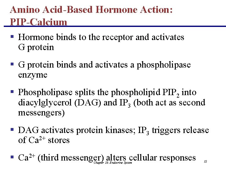 Amino Acid-Based Hormone Action: PIP-Calcium § Hormone binds to the receptor and activates G