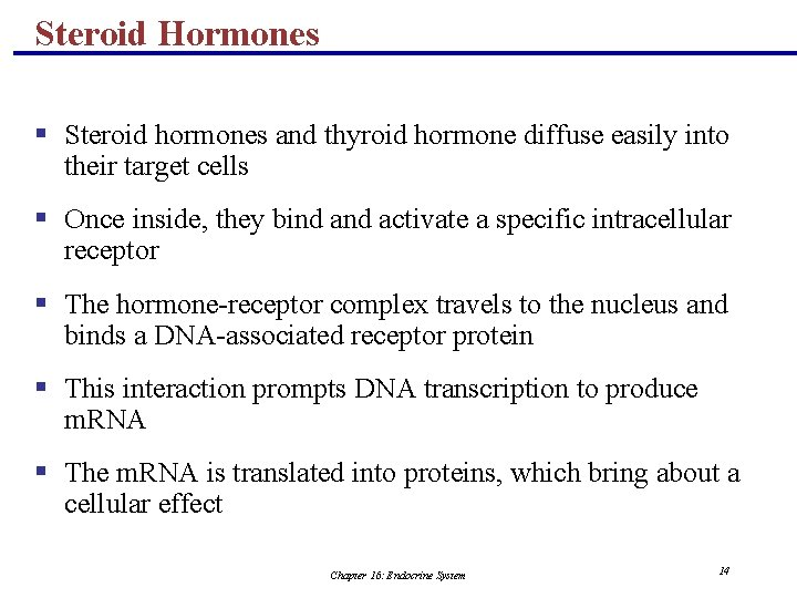 Steroid Hormones § Steroid hormones and thyroid hormone diffuse easily into their target cells