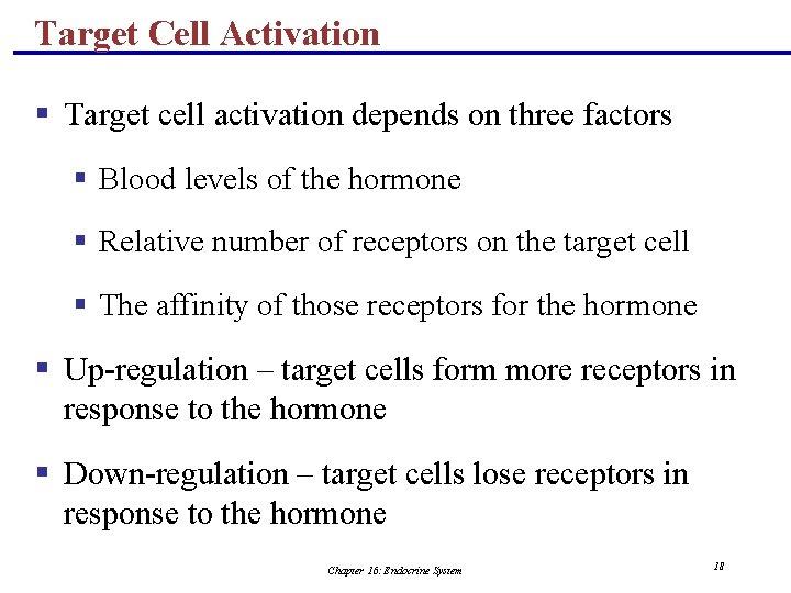 Target Cell Activation § Target cell activation depends on three factors § Blood levels