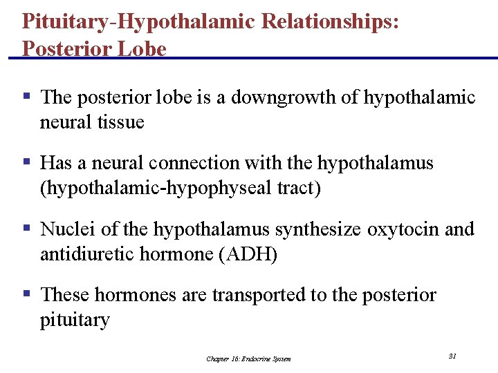 Pituitary-Hypothalamic Relationships: Posterior Lobe § The posterior lobe is a downgrowth of hypothalamic neural