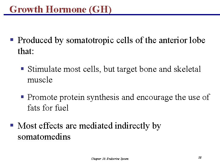 Growth Hormone (GH) § Produced by somatotropic cells of the anterior lobe that: §