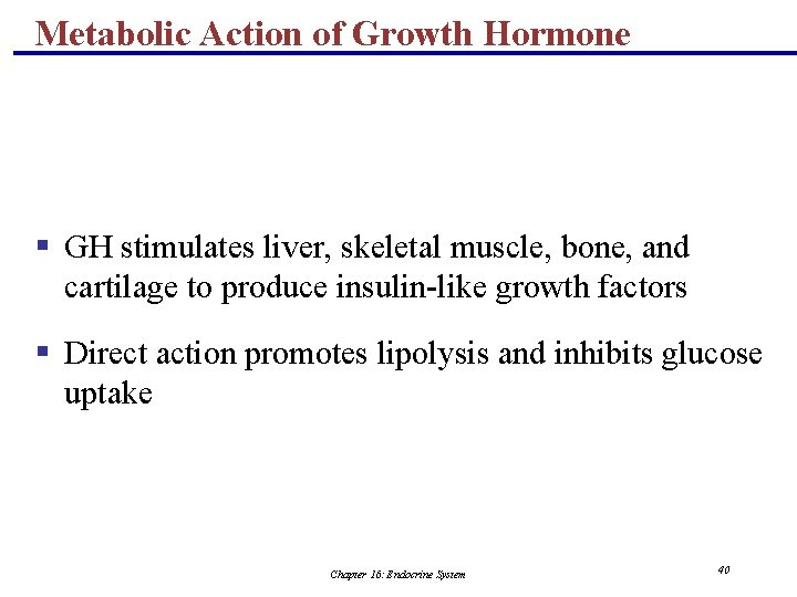 Metabolic Action of Growth Hormone § GH stimulates liver, skeletal muscle, bone, and cartilage