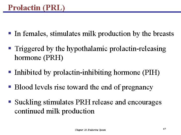 Prolactin (PRL) § In females, stimulates milk production by the breasts § Triggered by