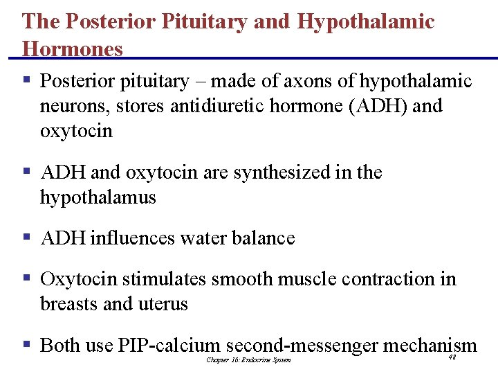 The Posterior Pituitary and Hypothalamic Hormones § Posterior pituitary – made of axons of
