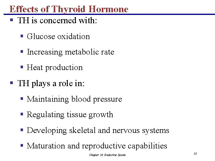 Effects of Thyroid Hormone § TH is concerned with: § Glucose oxidation § Increasing