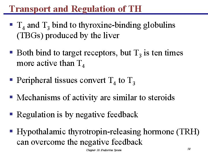 Transport and Regulation of TH § T 4 and T 3 bind to thyroxine-binding