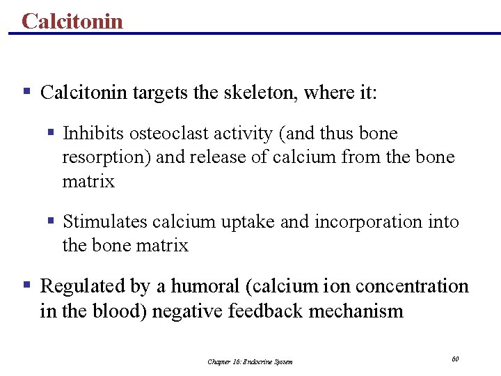 Calcitonin § Calcitonin targets the skeleton, where it: § Inhibits osteoclast activity (and thus