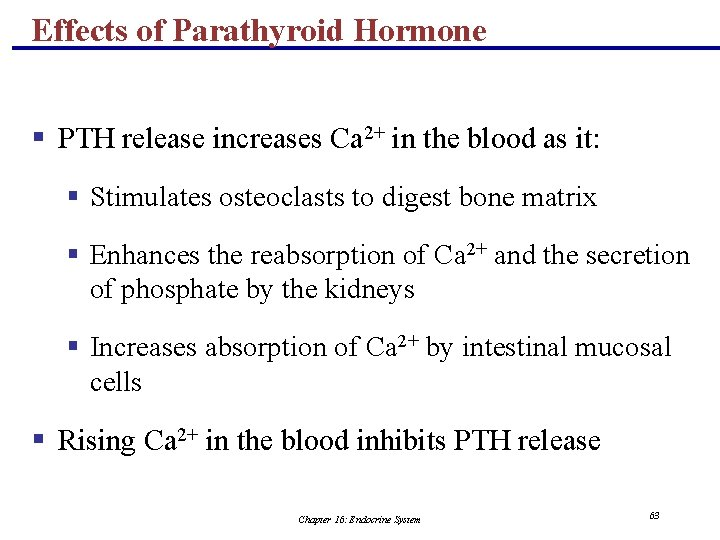Effects of Parathyroid Hormone § PTH release increases Ca 2+ in the blood as