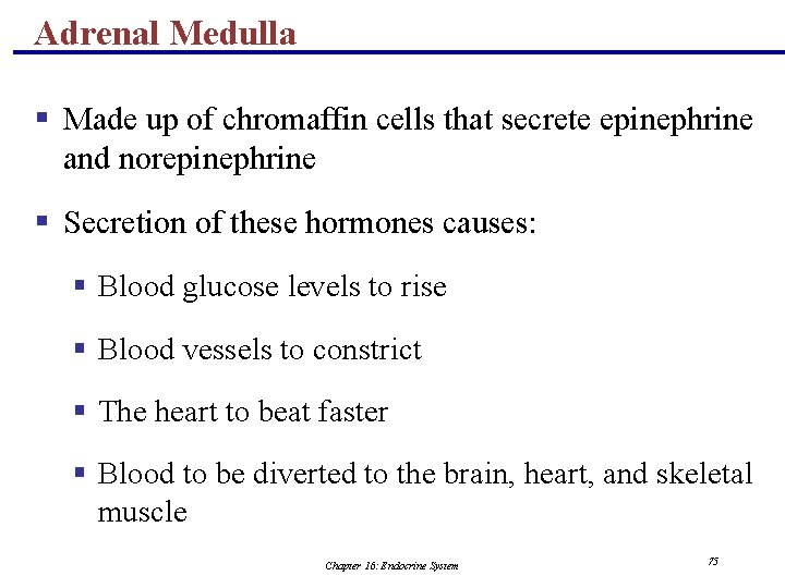Adrenal Medulla § Made up of chromaffin cells that secrete epinephrine and norepinephrine §