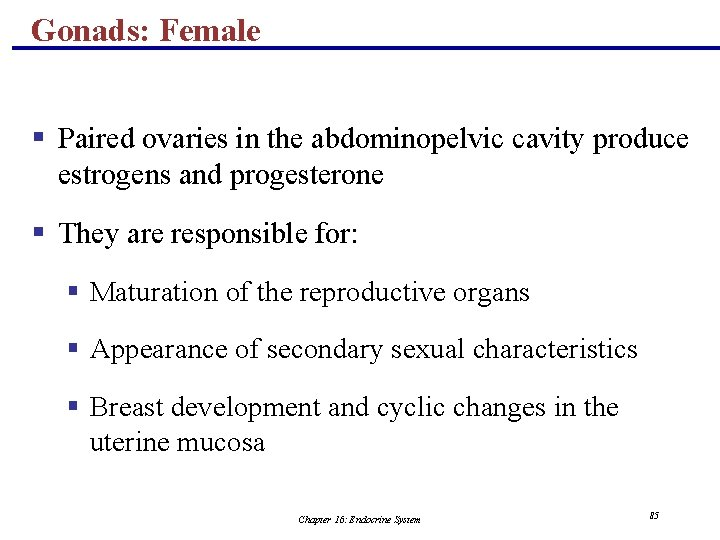 Gonads: Female § Paired ovaries in the abdominopelvic cavity produce estrogens and progesterone §