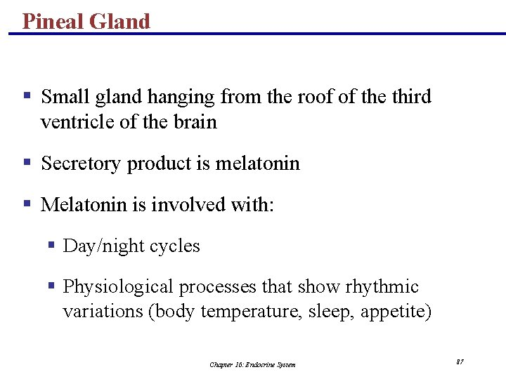 Pineal Gland § Small gland hanging from the roof of the third ventricle of