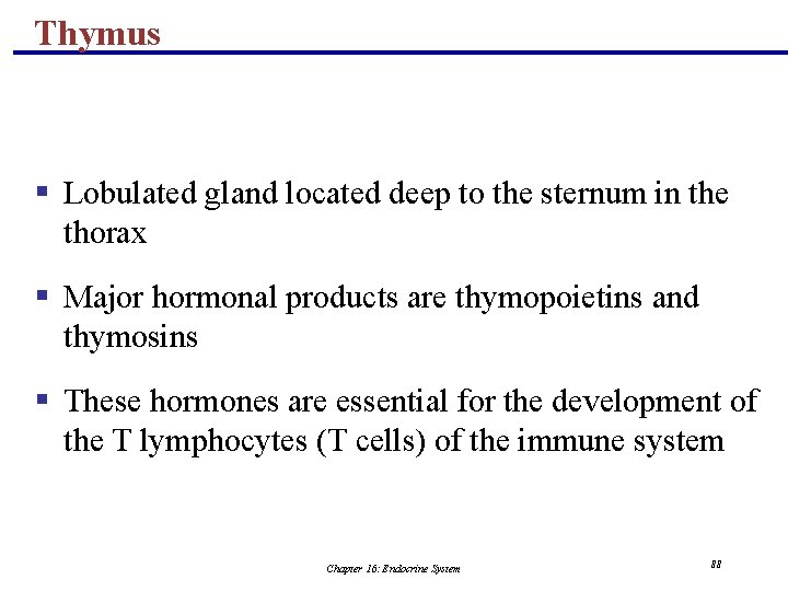 Thymus § Lobulated gland located deep to the sternum in the thorax § Major