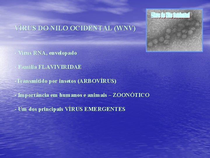 VÍRUS DO NILO OCIDENTAL (WNV) - Vírus RNA, envelopado - Família FLAVIVIRIDAE -Transmitido por