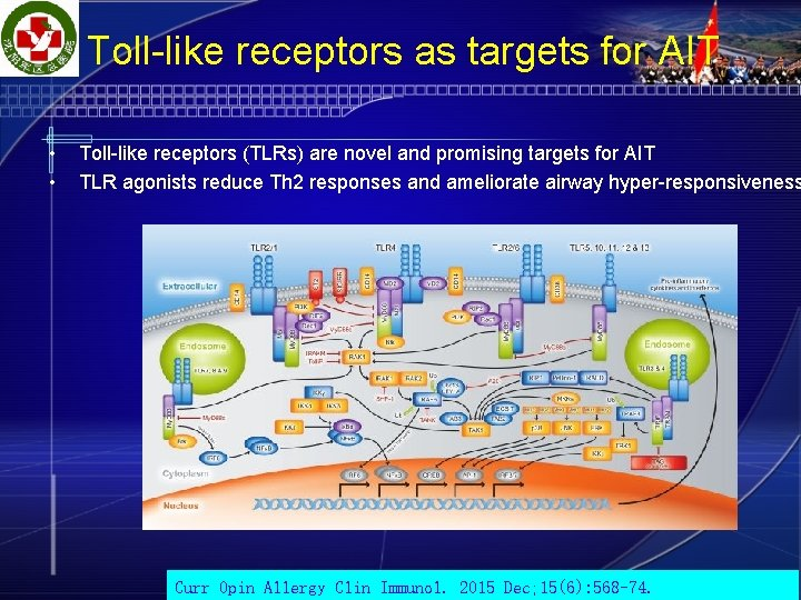 Toll-like receptors as targets for AIT • • Toll-like receptors (TLRs) are novel and