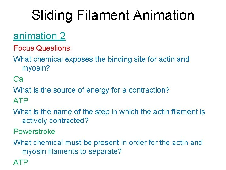 Sliding Filament Animation animation 2 Focus Questions: What chemical exposes the binding site for