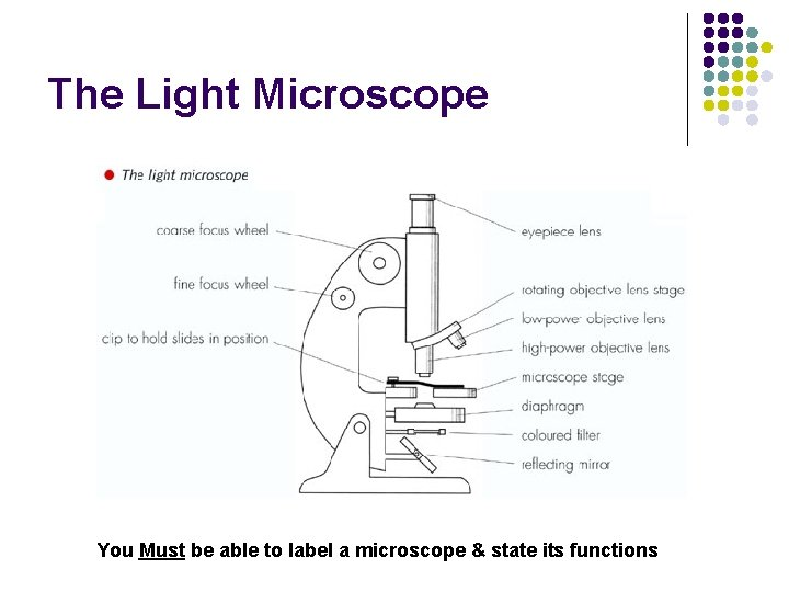 The Light Microscope You Must be able to label a microscope & state its