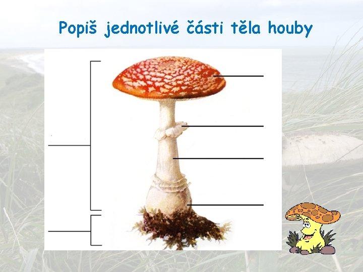 Popiš jednotlivé části těla houby