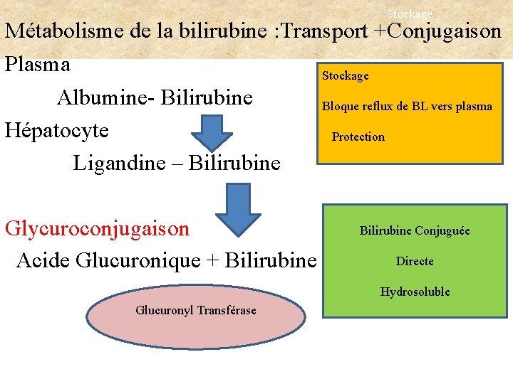 Stockage Métabolisme de la bilirubine : Transport +Conjugaison Plasma Stockage Albumine- Bilirubine Bloque reflux