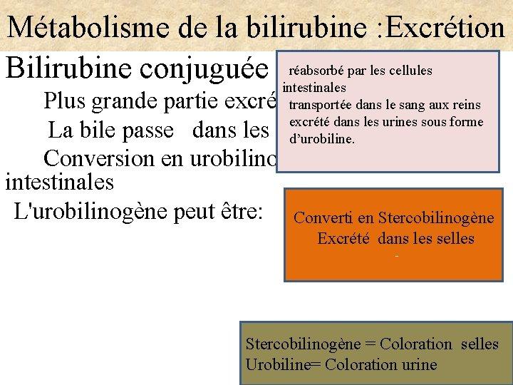 Métabolisme de la bilirubine : Excrétion Bilirubine conjuguée réabsorbé par les cellules intestinales Plus
