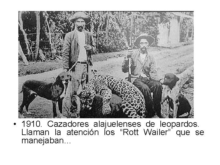 """• 1910. Cazadores alajuelenses de leopardos. Llaman la atención los """"Rott Wailer"""" que"""