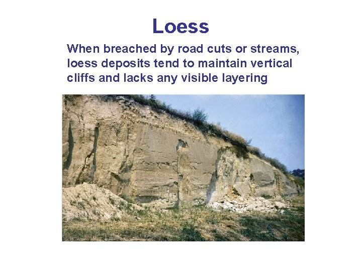 Loess When breached by road cuts or streams, loess deposits tend to maintain vertical