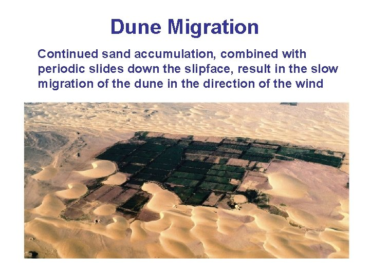 Dune Migration Continued sand accumulation, combined with periodic slides down the slipface, result in