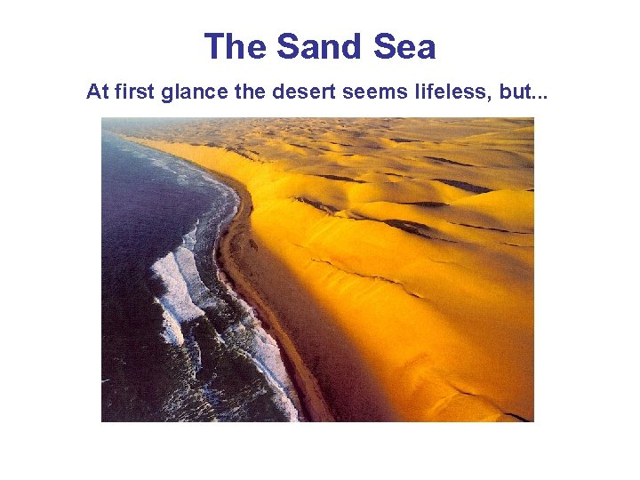 The Sand Sea At first glance the desert seems lifeless, but. . .