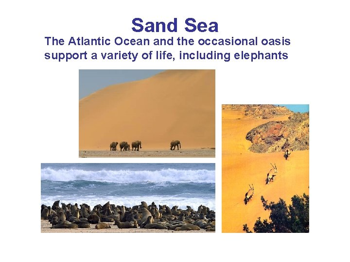 Sand Sea The Atlantic Ocean and the occasional oasis support a variety of life,