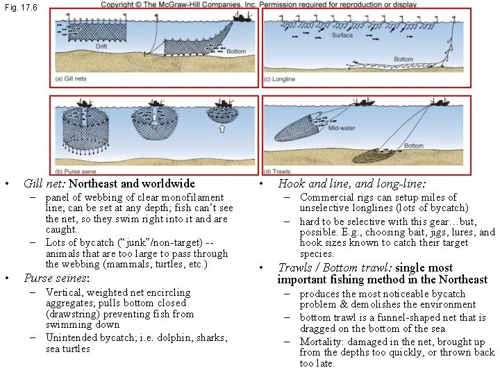 Fig. 17. 6 • Gill net: Northeast and worldwide – panel of webbing of
