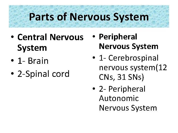 Parts of Nervous System • Central Nervous • Peripheral Nervous System • 1 -