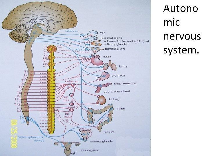 • Autono mic nervous system.