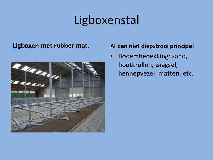 Ligboxenstal Ligboxen met rubber mat. Al dan niet diepstrooi principe! • Bodembedekking: zand, houtkrullen,