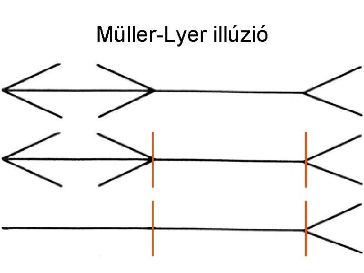 Müller-Lyer illúzió
