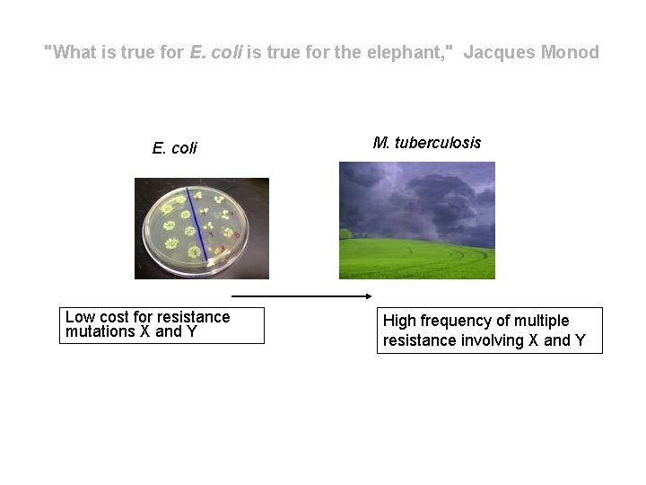 """""""What is true for E. coli is true for the elephant, """" Jacques Monod"""