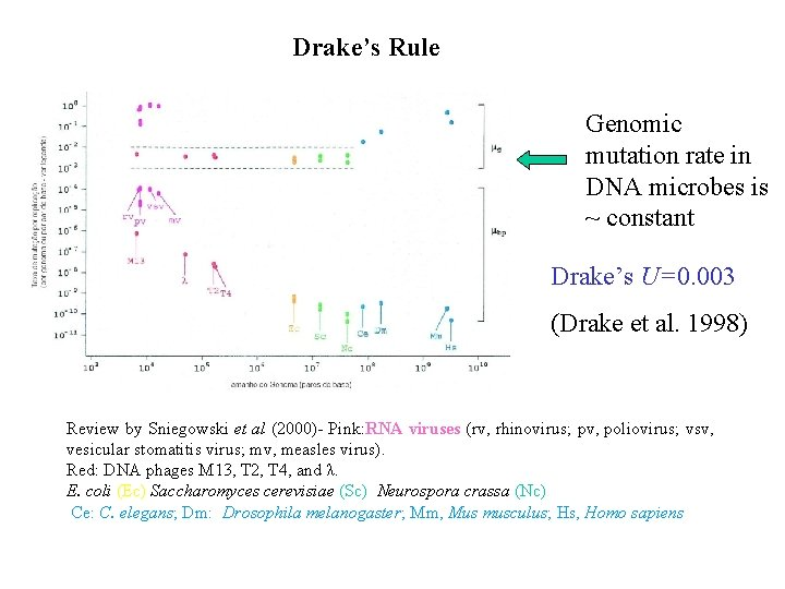 Drake's Rule Genomic mutation rate in DNA microbes is ~ constant Drake's U=0. 003