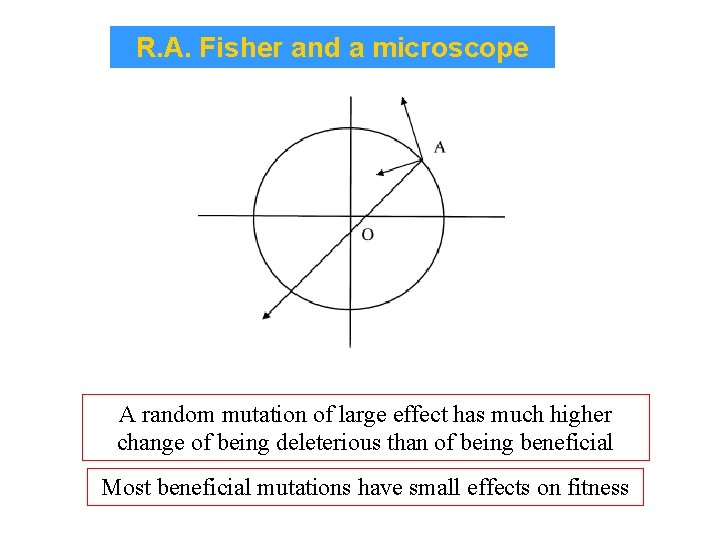 R. A. Fisher and a microscope A random mutation of large effect has much