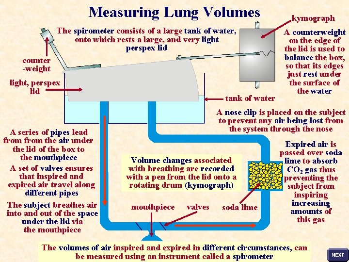 Measuring Lung Volumes The spirometer consists of a large tank of water, onto which