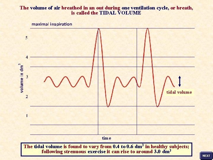 The volume of air breathed in an out during one ventilation cycle, or breath,