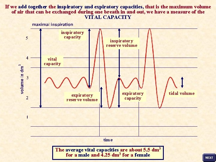 If we add together the inspiratory and expiratory capacities, that is the maximum volume