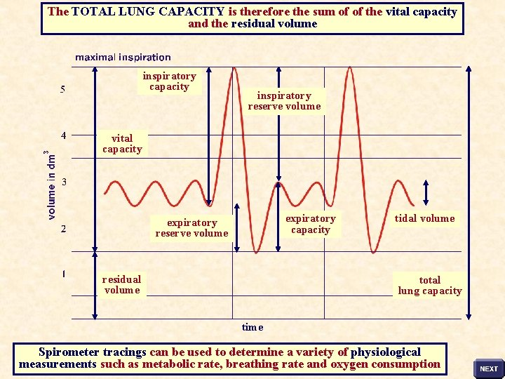 The TOTAL LUNG CAPACITY is therefore the sum of of the vital capacity and