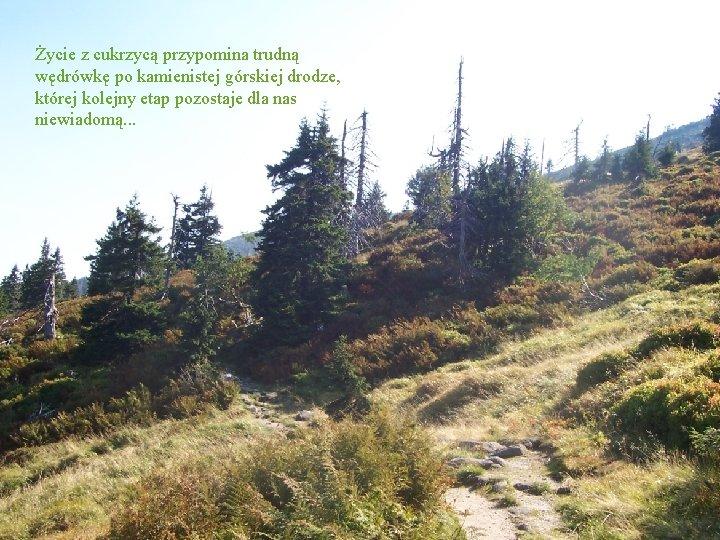 Życie z cukrzycą przypomina trudną wędrówkę po kamienistej górskiej drodze, której kolejny etap pozostaje