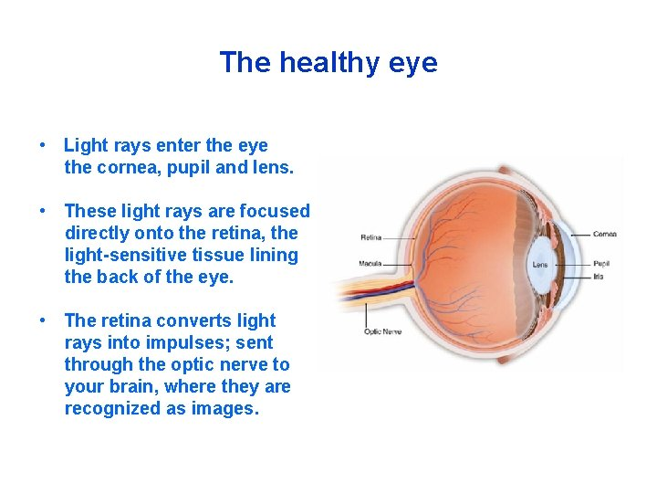 The healthy eye • Light rays enter the eye the cornea, pupil and lens.