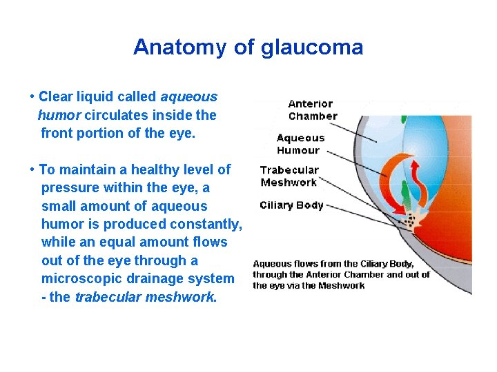 Anatomy of glaucoma • Clear liquid called aqueous humor circulates inside the front portion